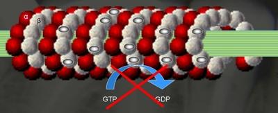 21-wissenschaftliche-grundlagen-einfuehrung-alzheimer-link-tubulin2