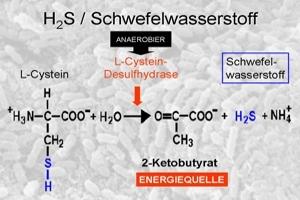 17-wissenschaftliche-grundlagen-einfuehrung-h2s